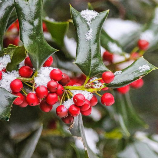 What Plants Should Gardeners Water Before Winter?