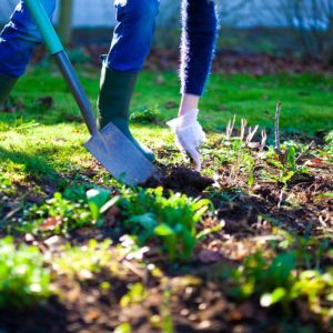How to Prepare Your Garden for Winter in Two Days