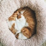 How to Choose the Best Bed for Your Cat
