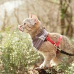 How to Choose a Harness for a Cat