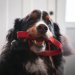 How to Choose the Best Leash for Your Dog