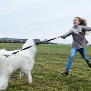 9 Best Dog Leashes