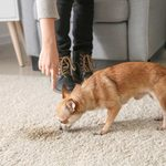 6 Best Products for Getting Urine Out of Carpet