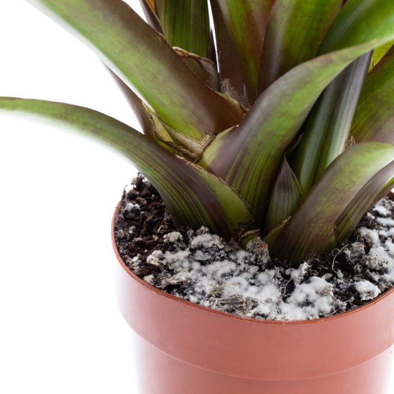 Mold on plant soil