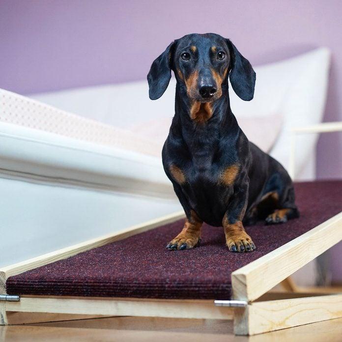 Dog on a pet ramp
