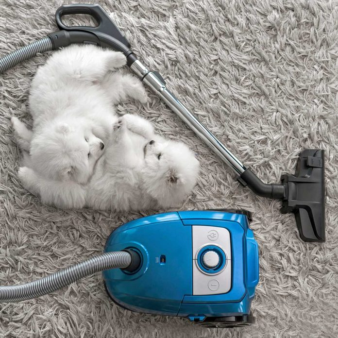 Dogs laying near a vacuum