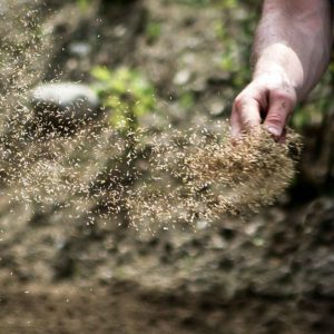 When to Overseed Your Lawn