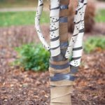 What Is Tree Wrap and How Do I Use It?
