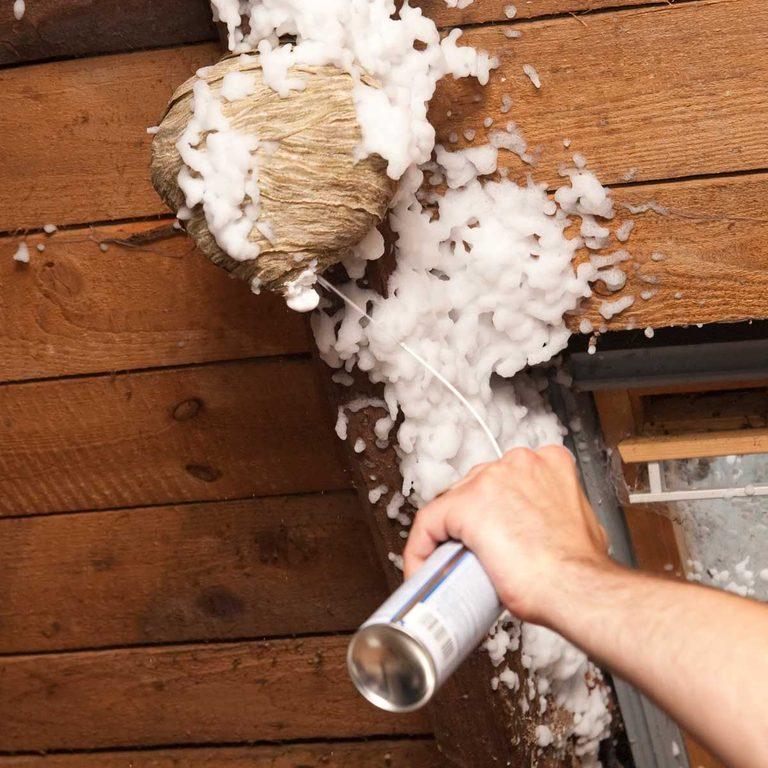 Spraying a wasp nest