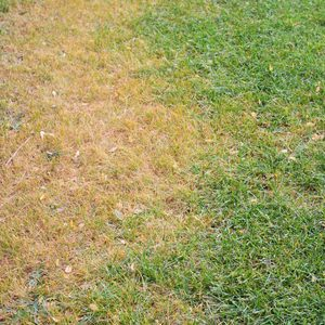 What Makes Grass Yellow and How Do I Fix It?