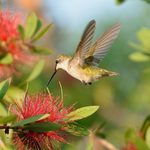 Discover the Truth About Common Hummingbird Myths