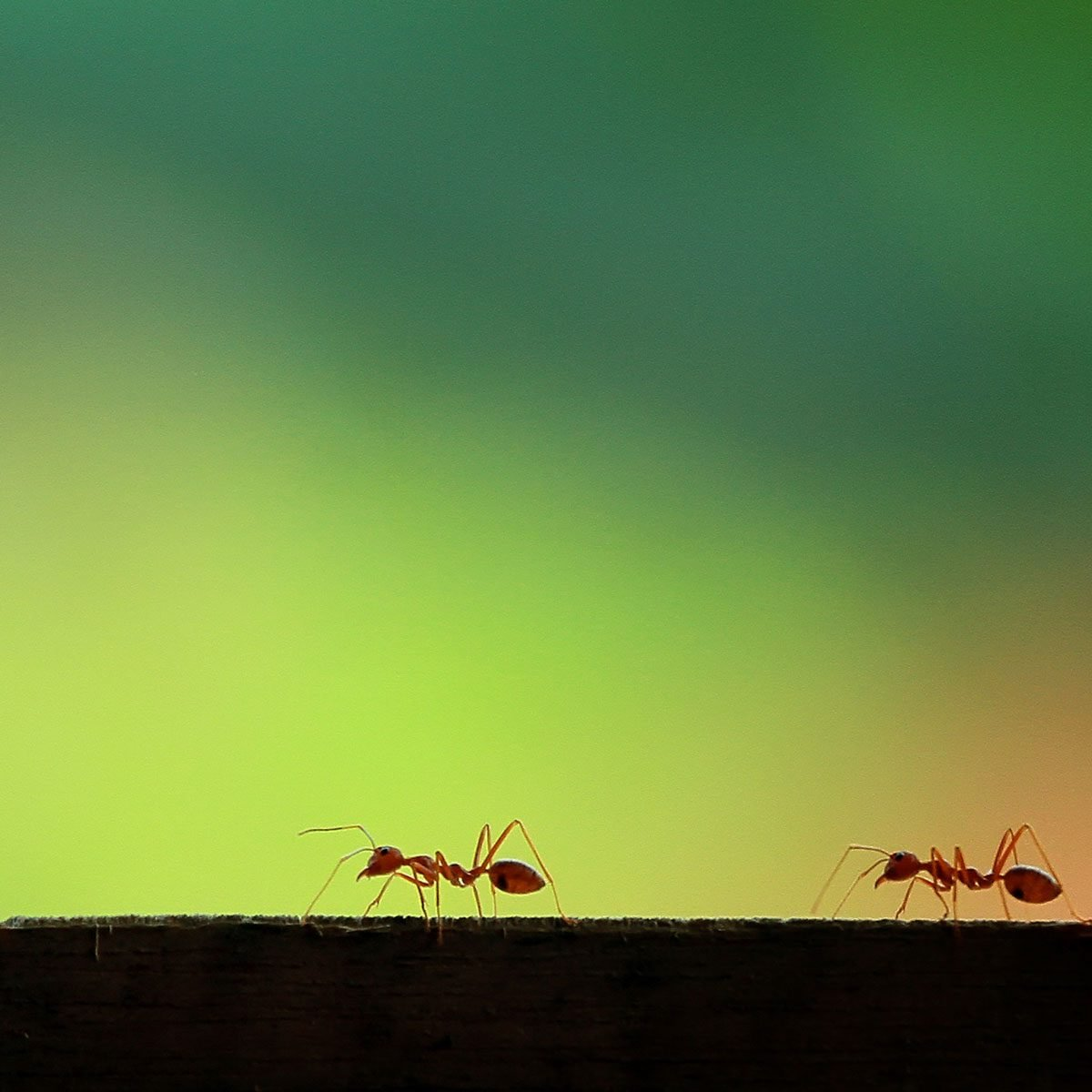 11 Interesting Facts About Ants