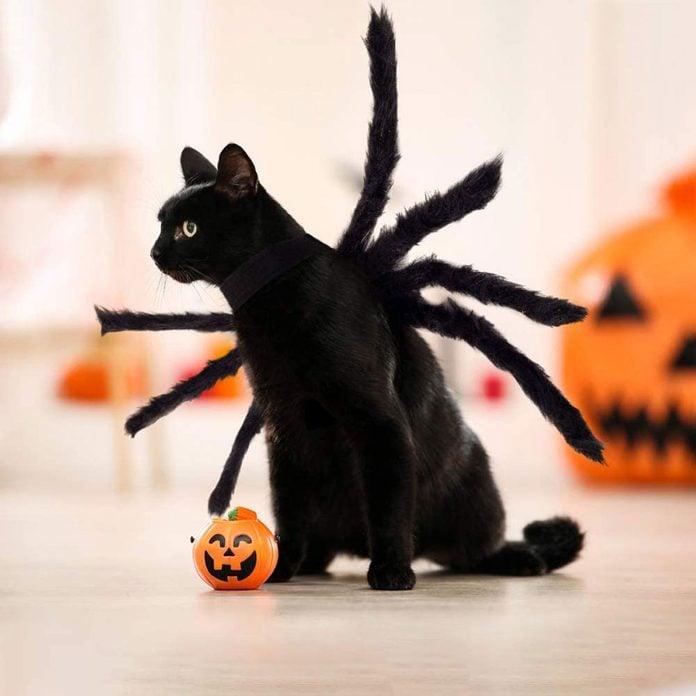 Spider cat costume