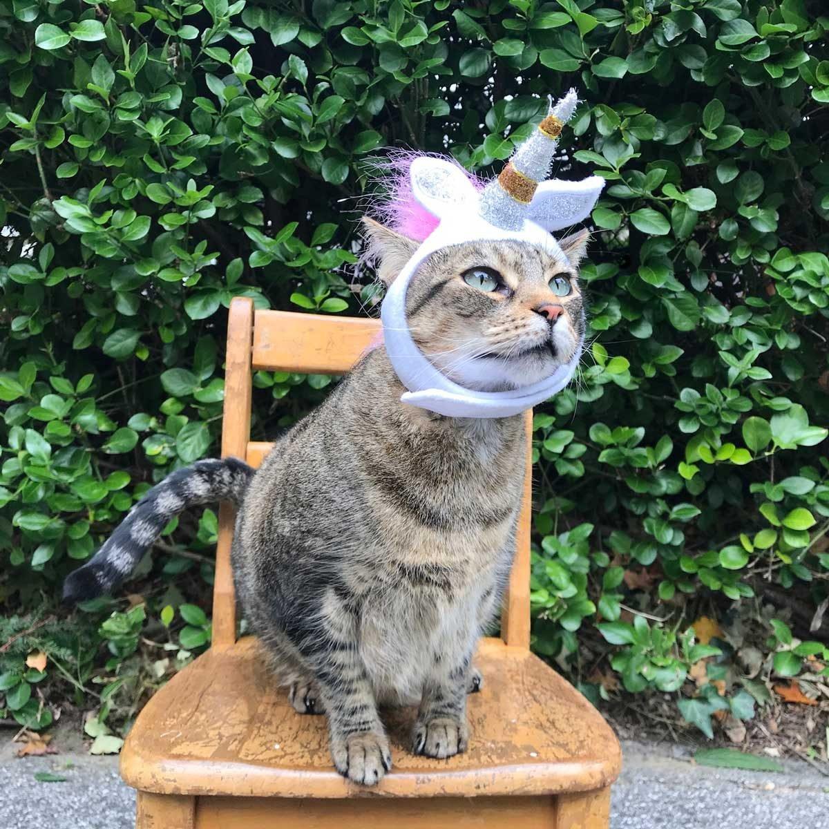 Unicorn cat costume