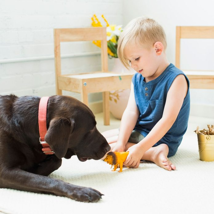 Dog playing with a child