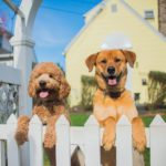 Best Dog Fences For Every Breed and Homeowner Need