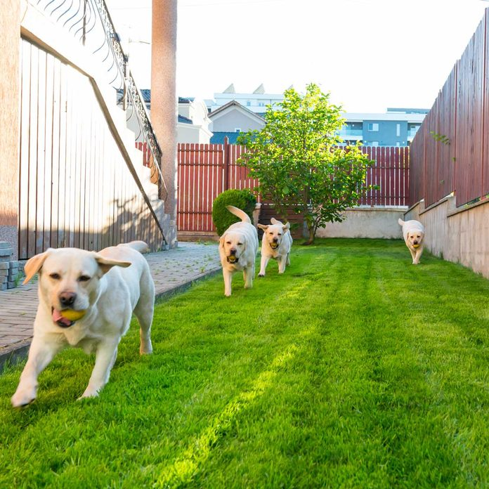 How To Choose The Best Fence For Your Dog The Family Handyman
