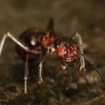 The Homeowner's Guide to Ant Pest Control