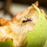12 Best Ways to Kill Ants in Your Home and Yard