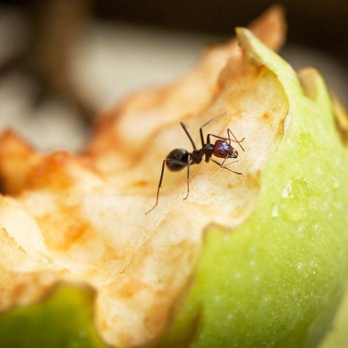 Ant on an apple