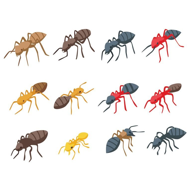 Illustrations of ant species