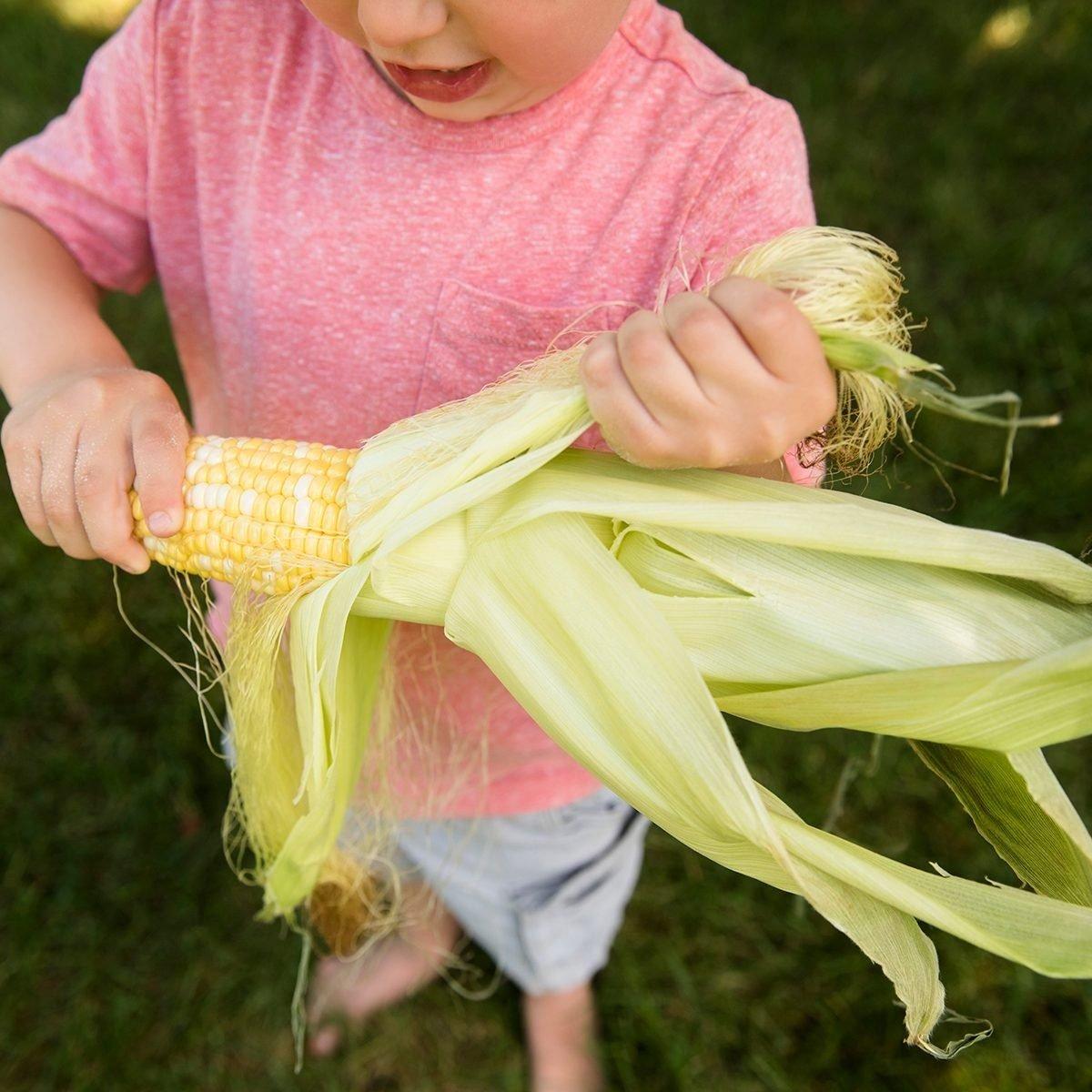 Boy (4-5) peeling corn cob
