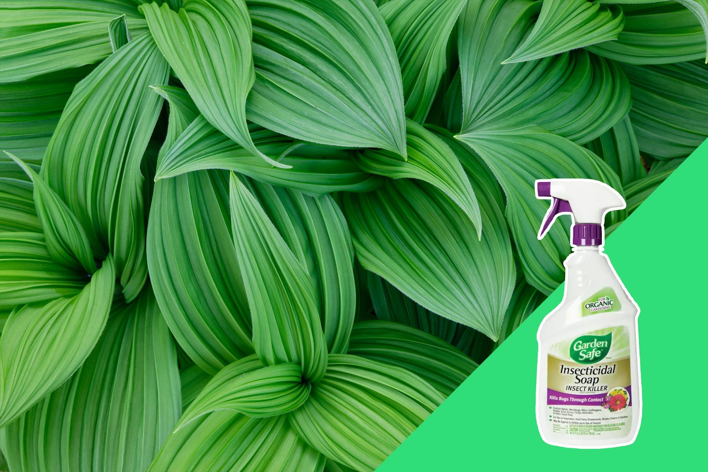 Plants and plant-cleaning supplies