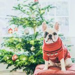 10 Potential Holiday Dangers for Your Dog