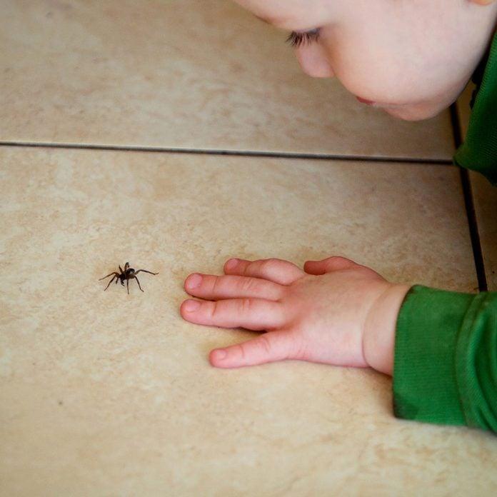 boy looking at spider