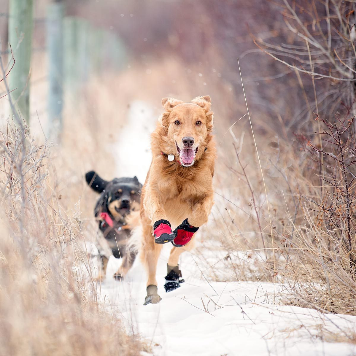 5 Ways To Protect Your Pet's Paws In Cold Weather