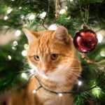 Tips for Keeping Cats Out of Your Christmas Tree