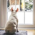9 Ways to Keep Your Dog Active Inside During the Winter