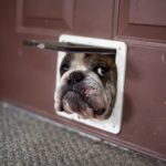 How to Winterize a Dog Door