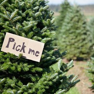 How to Cut Down Your Own Christmas Tree
