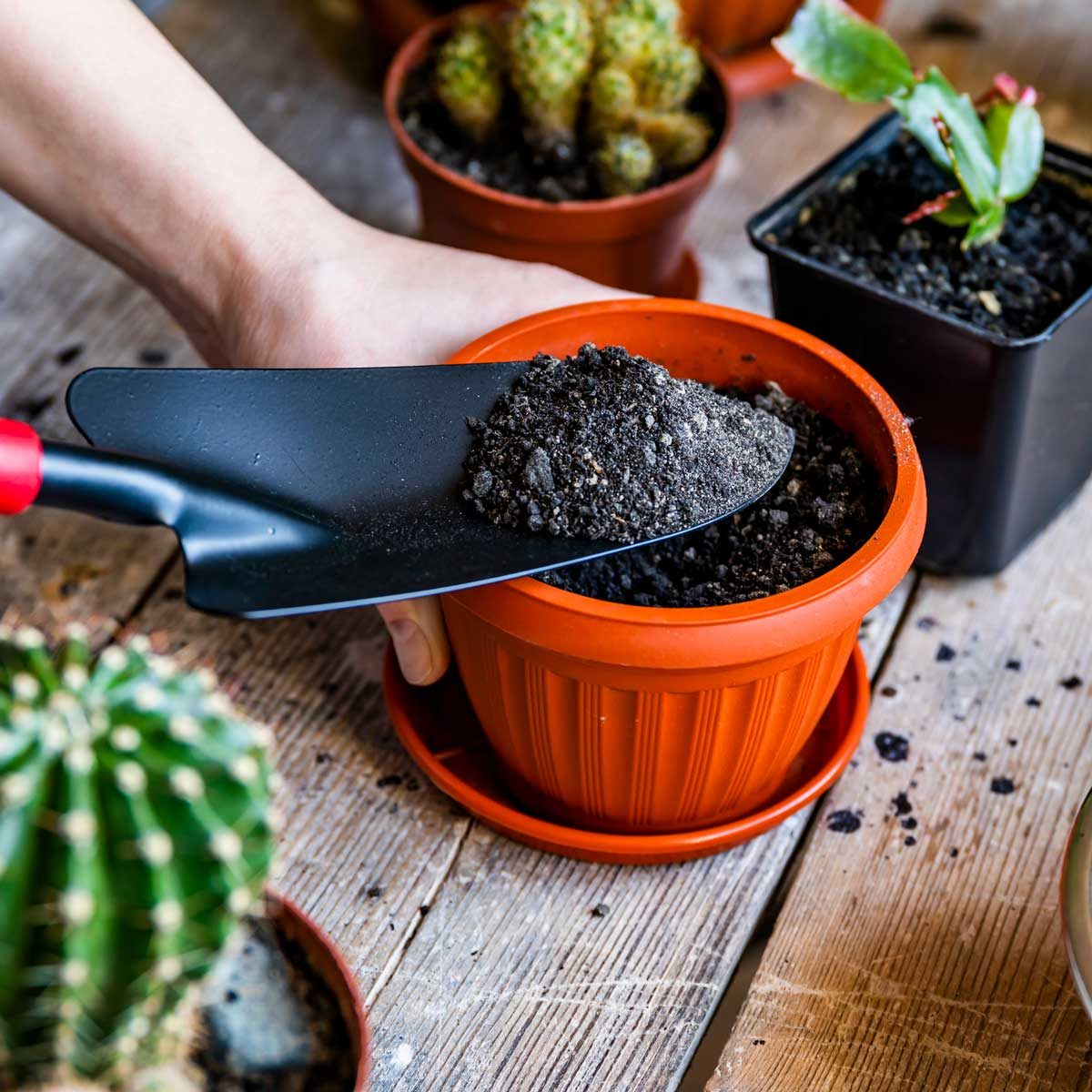 Putting potting soil into containers