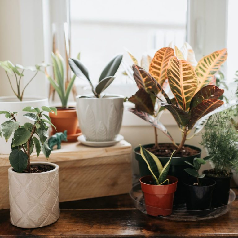 Window corner full of house plants