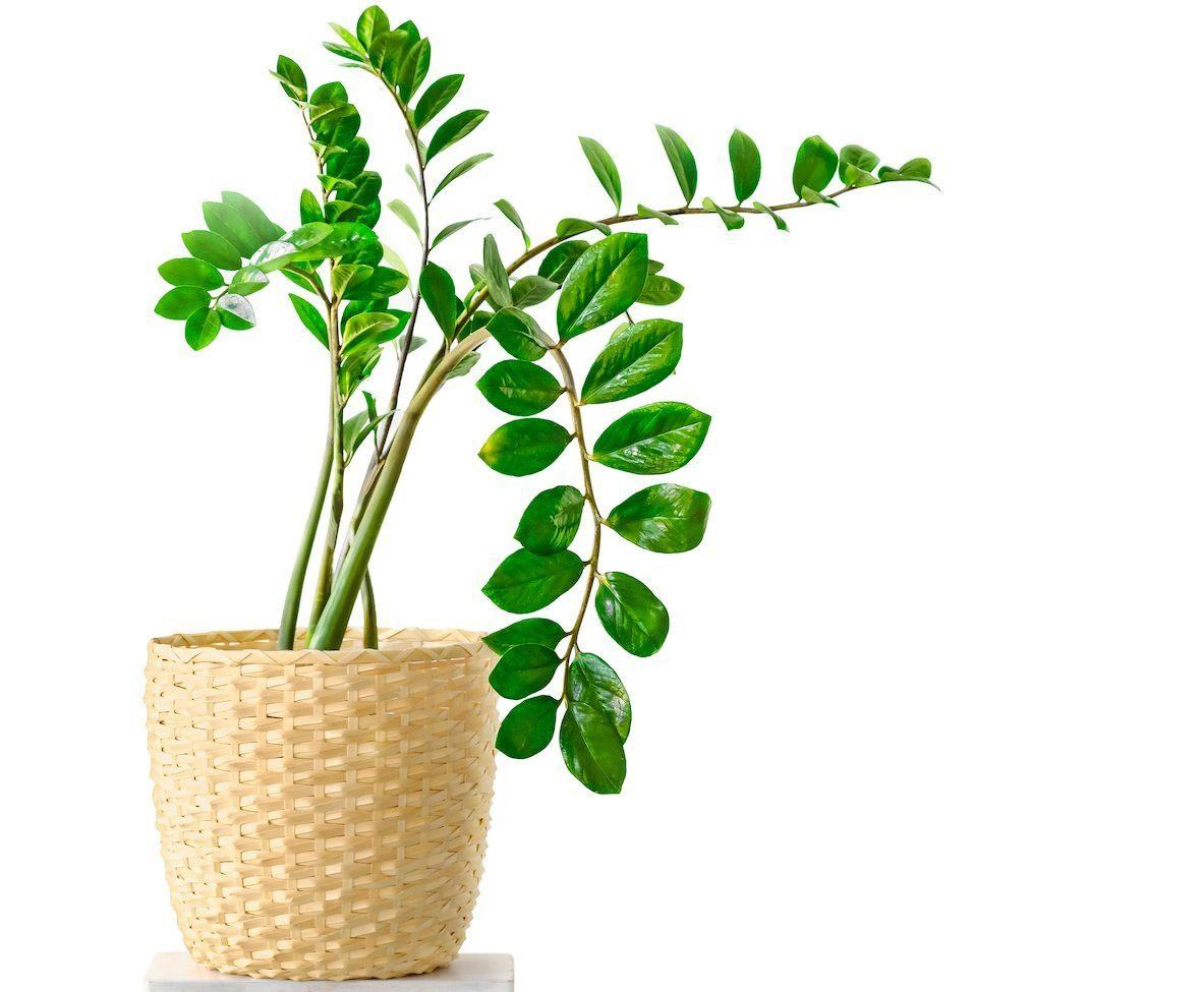leggy plant leaning toward light