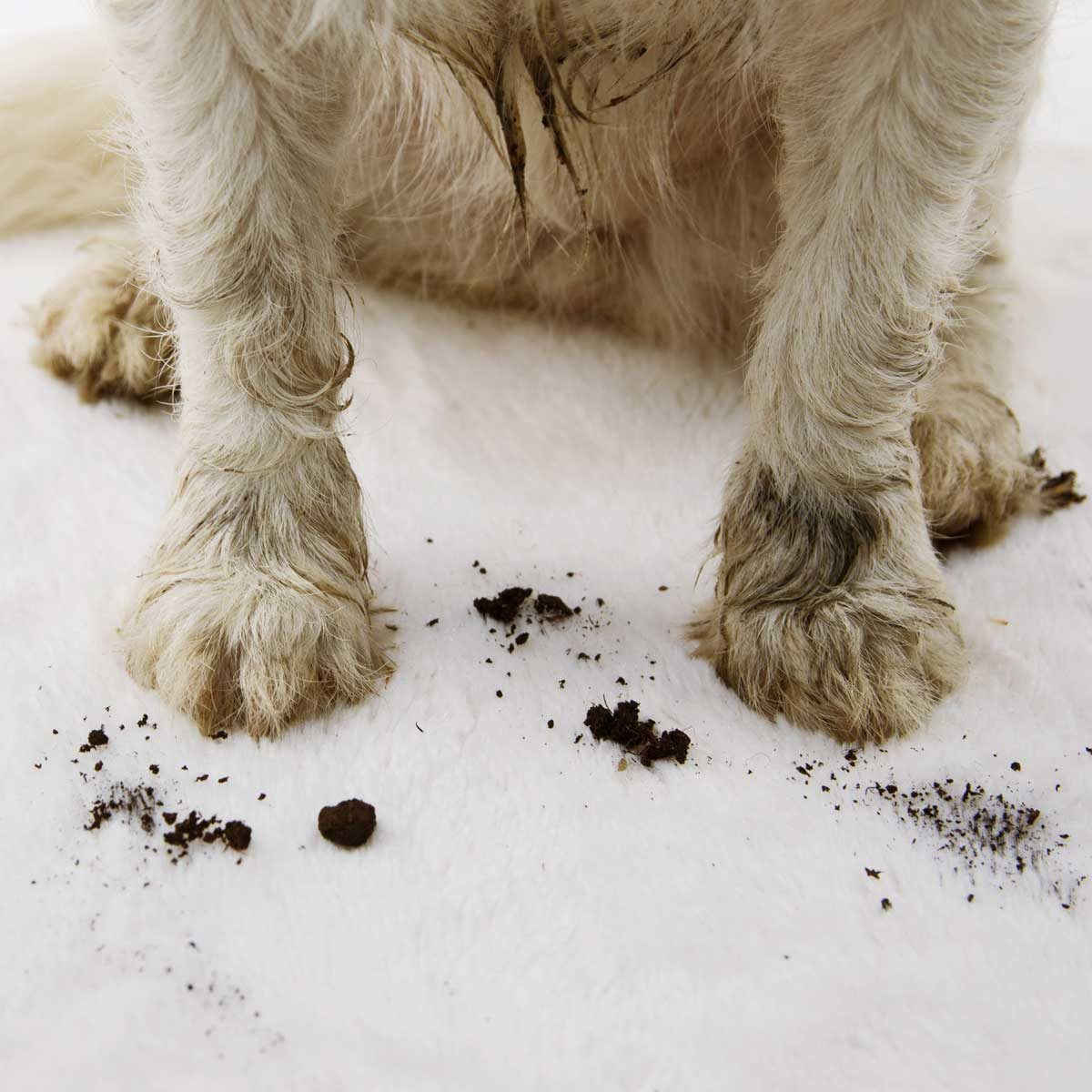 Dirty Paws Gettyimages 1146516653