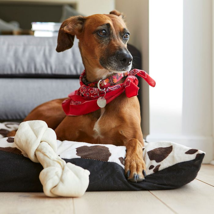 Dog Bed Gettyimages 685006659