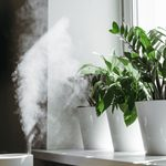 9 Innovative Plant Humidifiers and Misters