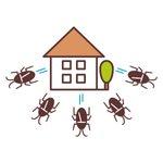 8 Best Cockroach Repellents