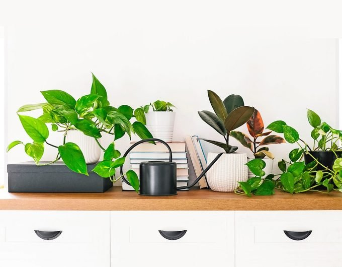 how to prevent bugs on indoor plants