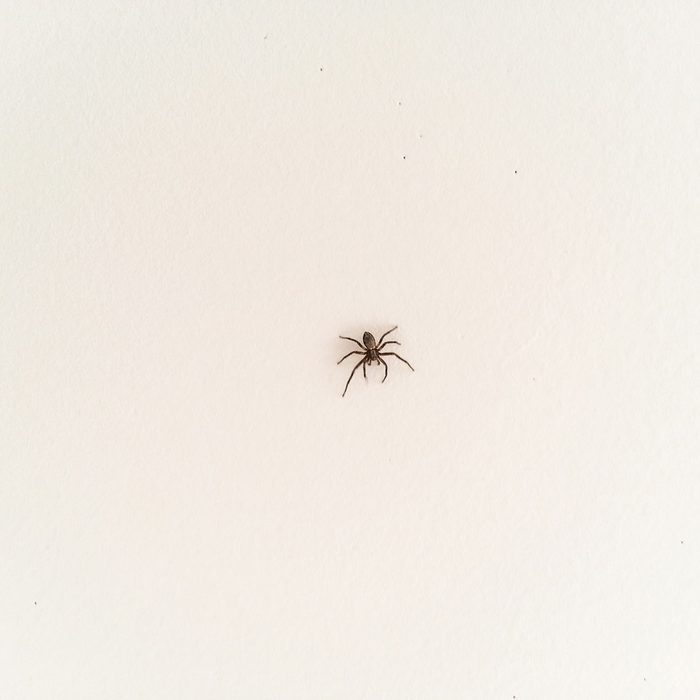 Spider Gettyimages 167303496