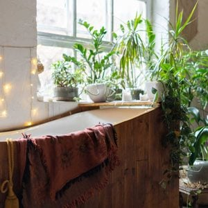 7 Humidity-Loving Plants for Your Bathroom