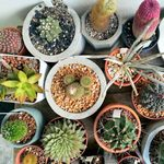 8 Easy Types of Cactus for Beginner Gardeners to Grow