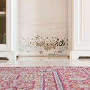 Best Mold- and Mildew-Resistant Paints for 2021