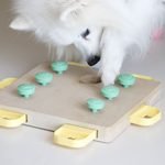 8 Great Dog Bowl Alternatives (And Why Your Dog Might Love One)
