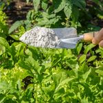 What Is Diatomaceous Earth?