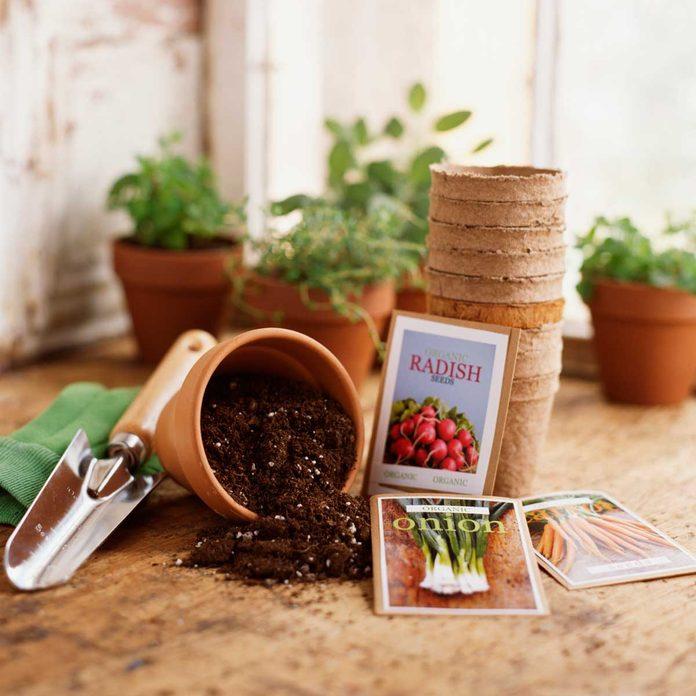 Garden Seeds Gettyimages 89743406