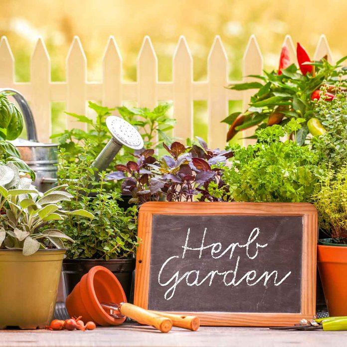 Herb Garden Gettyimages 475916925